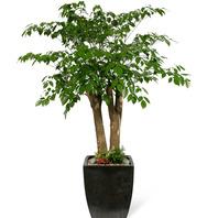 행복나무 11